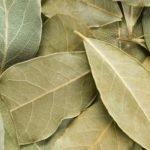 Les avantages étonnants de l'huile de feuille de laurier